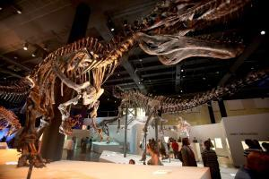 Inside the dinosaur museum in Houston Texas showing you where to take a selfie.